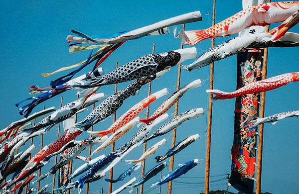 Lễ hội cờ cá chép Koinobori