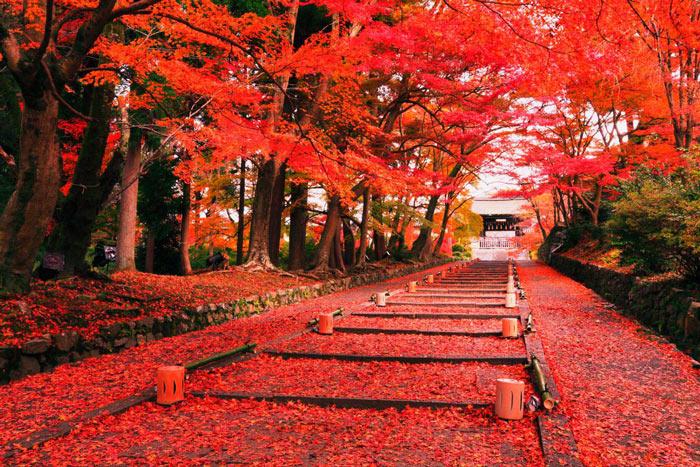 nhật bản mùa lá đỏ
