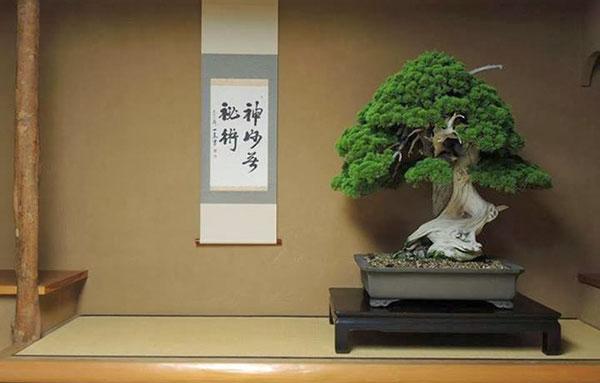 ý nghĩa của nghệ thuật bonsai
