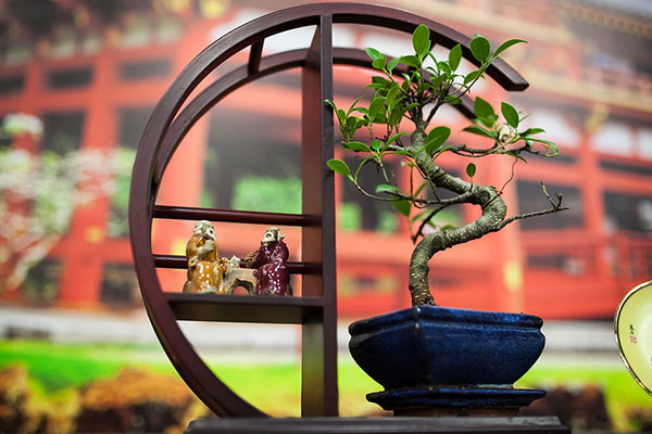tinh thần nước nhật thể hiên trong bonsai