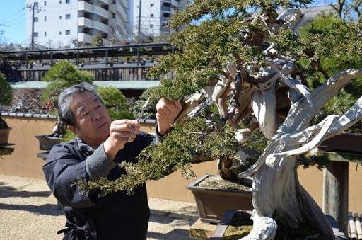 nghệ nhân bonsai