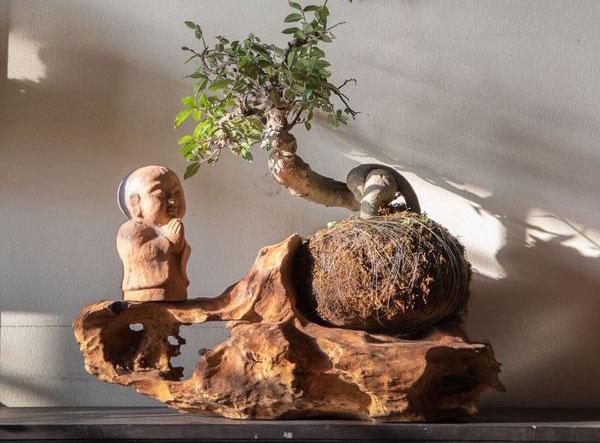 sắc thái thiền trong bonsai nhật bản