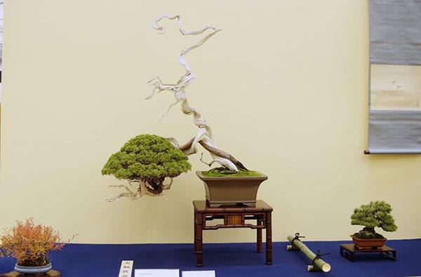 nghệ thuật bonsai nhật bản